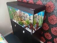 Fluval 220 litre aquarium setup