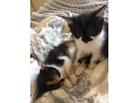 Beautiful little kittens for sale