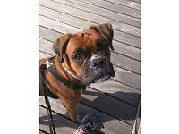 DOG WALKER/PET CARER.HOUSE SITTING.