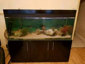 5x2x2 FISHTANK WITH CABINET AND EXTERNAL FILTER
