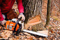 Tree Cutting - Affordable & Reliable