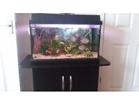 Tropicsl fish tank and black cupboardand stand