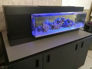 Salt water fish and corals care