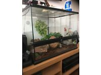 Snake tank as with heat mats and accessories