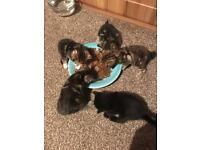 1 male tabby kitten left