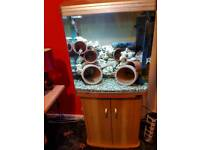 Aqua One 620T Bow Fronted Aquarium + Stand in beach and silver with Fish & Extras