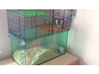 Gerbils and cage for sale
