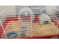 2 Russian dwarf hamsters