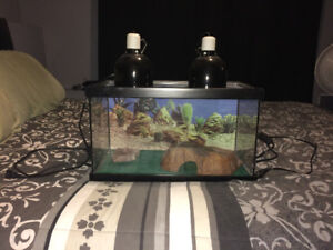 Reptile tank and accessories
