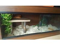 Corn snake and set up/viv