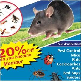 Pest Control In london Mice Bedbugs Rat Ants Cockroaches Exterminator 100% Same day