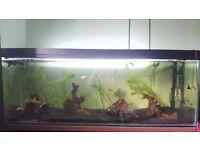 200L 4ft aquarium with fish, heater, filter, lighting etc