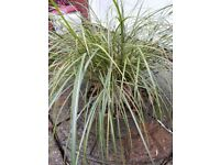 Lovely grass plant