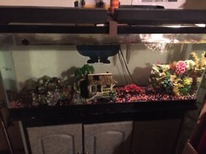 Fish Tank and stand, with plenty of accessories.
