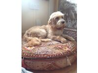 pet sitting & dog walking service based in a luxury family home