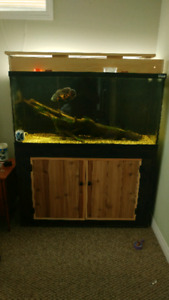 90 gallon aquarium with stand and oscar