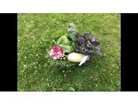 Beautiful Tasty Local Organic Veg Box on your doorstep