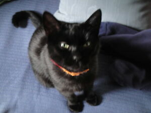 Lost Kitty - Jemseg, is now FOUND! Thank you!