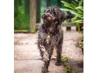Dog walking- £10 an hour