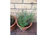 Selection of 4 Garden Plants