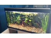 Fluval fish tank for sale complete