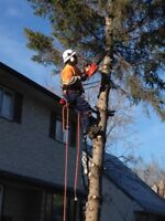 TREE REMOVALS-PRUNING FULLY INSURED ARBORIST 25 YEARS EXPERIENCE