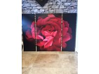 Collection Red Rose