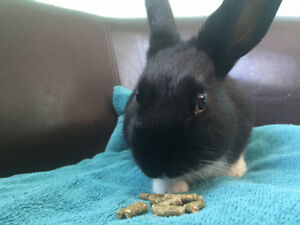 Mum and Baby Bunny need a new Home
