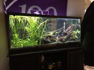 55 Gal aquarium (filter drift wood fish lighting system)