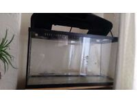 Fish tank with filter and heater