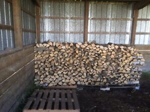 White poplar fire wood