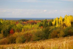 43 ac. PRICE REDUCED Ocean View Pictou Co, Nova Scotia acreage