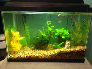 Fish tank complete with fish for sale