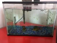 Starter Fish tank - whole set plus 4 coldwater fish