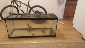 Reptile tank and accessories, massive savings