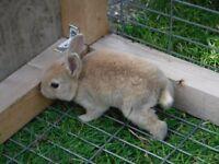 rex rabbits!