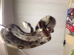 Reptile Rehome and Care