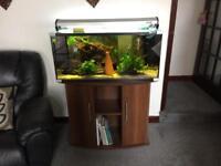 3ft Aqua one aquarium and 3ft stand