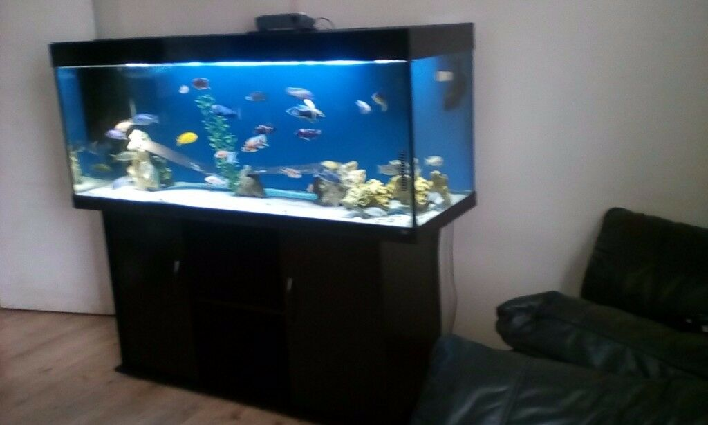 wow 5ft 450 litre juwel rio 400 big fish tank aquarium tropical marine malawi cichlid 39 s. Black Bedroom Furniture Sets. Home Design Ideas