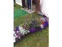 Bedding plants / wooden boxs