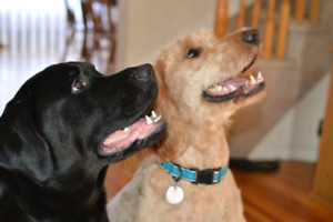 Looking for forever home for two awesome dogs