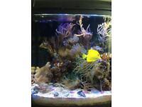 Marine tank Aquarium Gorgonian tree Coral frags