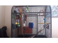 2 Budgies plus extra large cage. Includes all accessories and smaller travel cage.