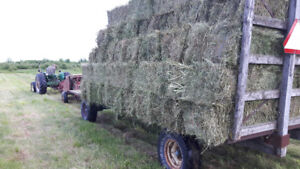 Small Square Bales- Hay