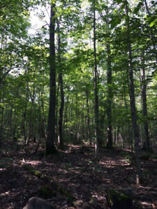 100 Acre Wooded Lot Manitoulin Island