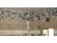 Damp & Mould Specialist