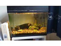 1.5ft Tropical Fish Tank