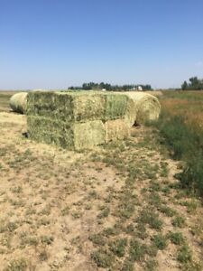 HAY FOR SALE!!! Enchant, ab