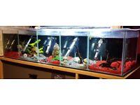 Aquarium - 5 compartment betta/shrimp/fry tank + 5 internal filters/heaters *REDUCED PRICE*