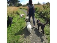 Dog walking, day care & home boarding